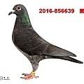 2016-856639    黑母