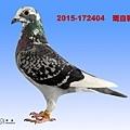 2015-172404    斑白羽母