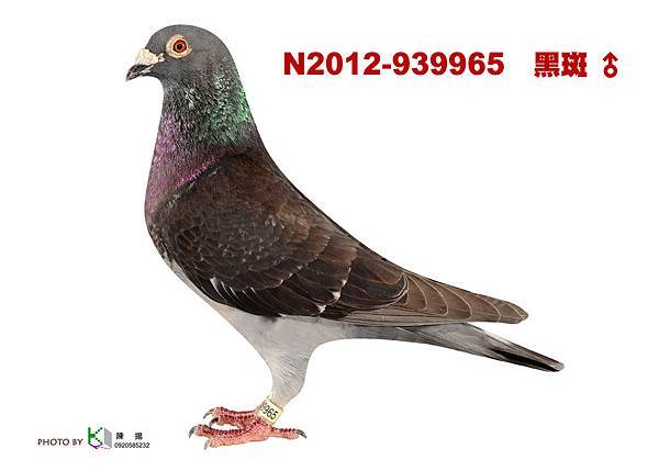 N.2012-939965 黑斑公