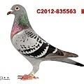 C.2012-835563    斑母