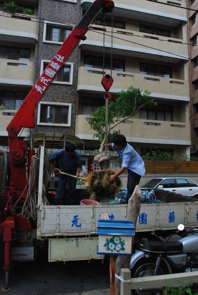 感謝桃園的林先生父子幫忙種樹!!