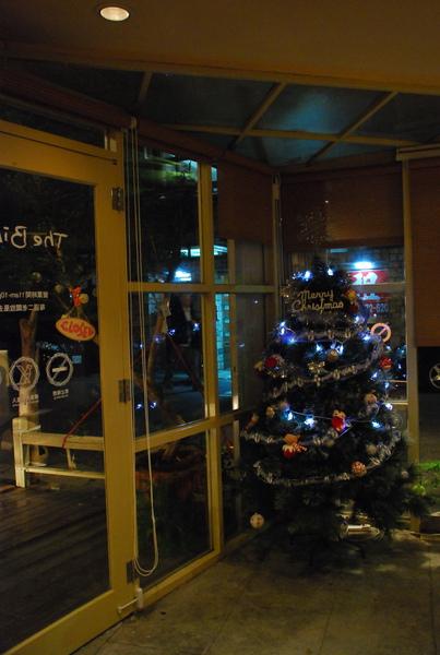 鳥聖誕樹來啦!