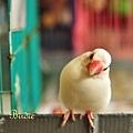 DSC_0623_雞
