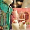 DSC_0868_雞