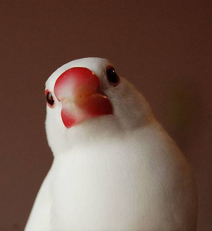 鳥界林志玲