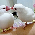 小帥說:收下你的好鳥卡吧!