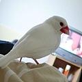 小香對電視節目很不滿