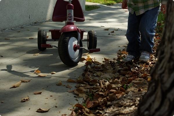 """喜歡踩路邊的落葉,小碩稱之為""""脆脆的葉子""""。"""