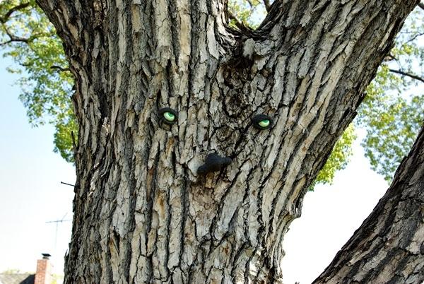 樹上的臉-1