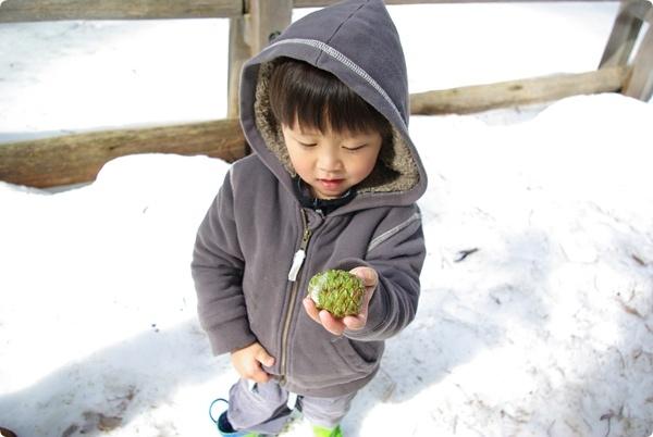 結凍的樹果