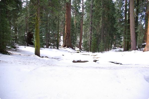 到處都覆蓋著白雪