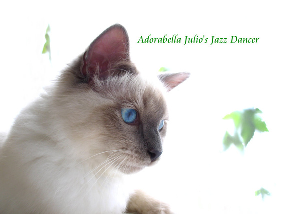 Adorabella Julio's Jazz Dancer 4.jpg
