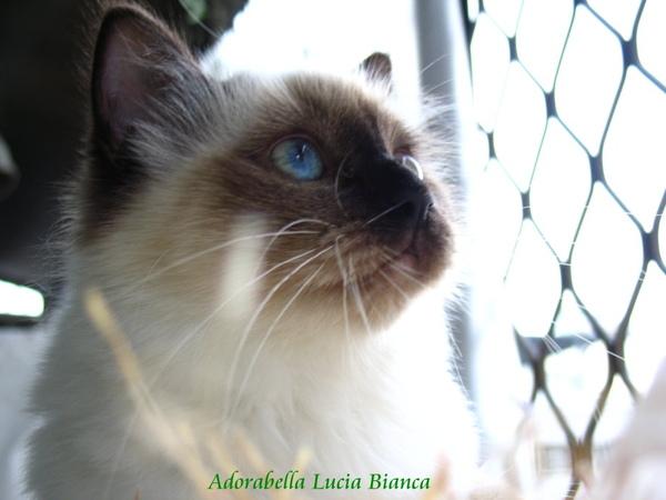 Adorabella Lucia Bianca 5.jpg
