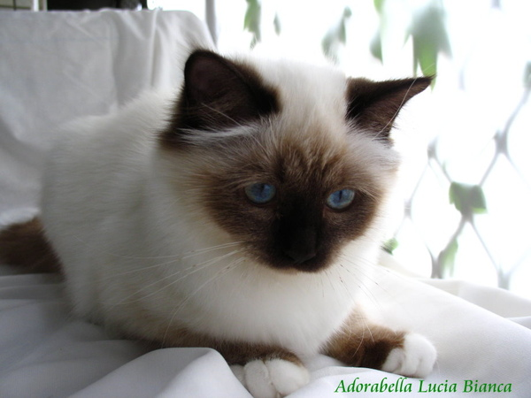 Adorabella Lucia Bianca 4.jpg