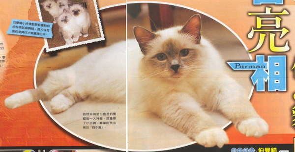 E-magazine 7.jpg