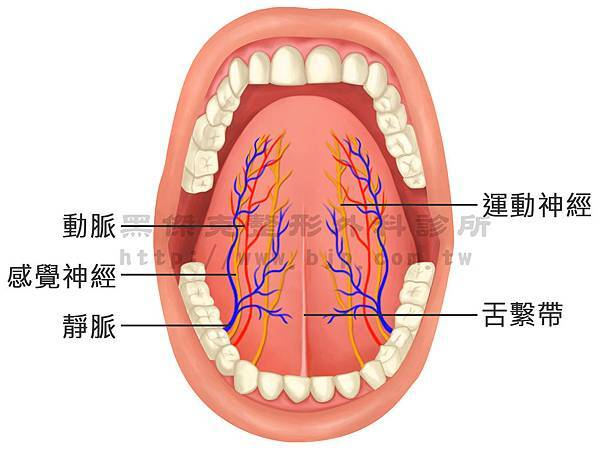 舌頭.jpg
