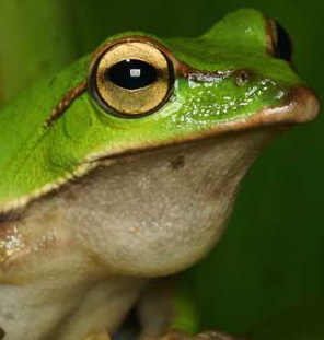 青蛙下巴.jpg