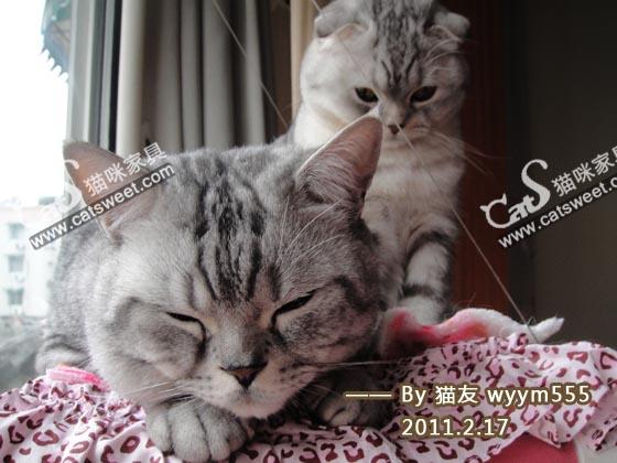 CatS_032211.JPG