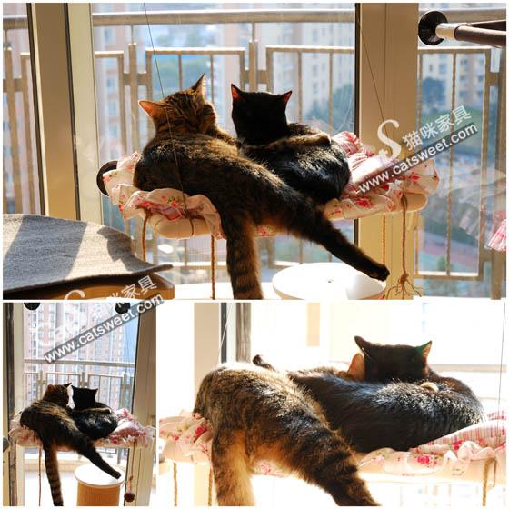 CatS_010104.jpg