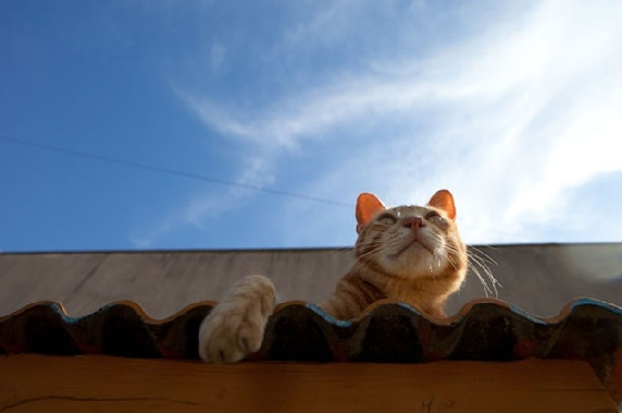 貓咪曬太陽
