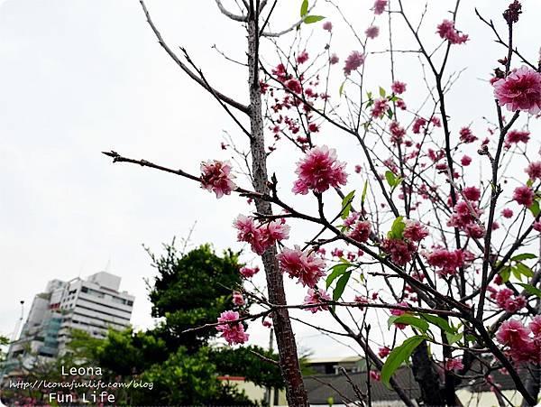 員林警察故事館 櫻花