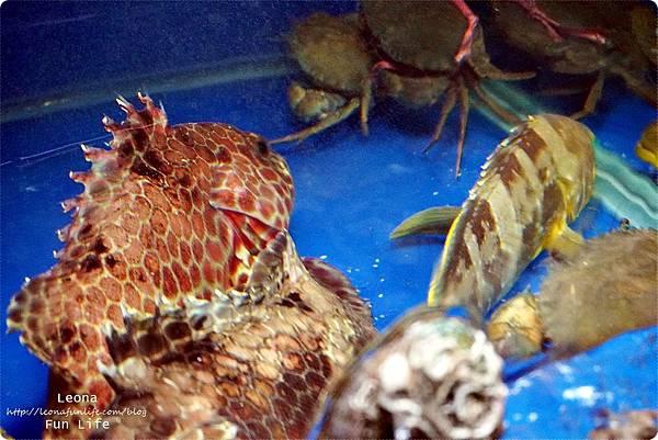 螃蟹專賣大祥海鮮屋台中美食澎湖新鮮直送海產DSC01626.JPG
