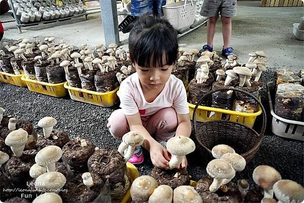 新社親子DIY景點 百菇莊 採菇 吃菇 買菇 DO菇DSC02399.JPG