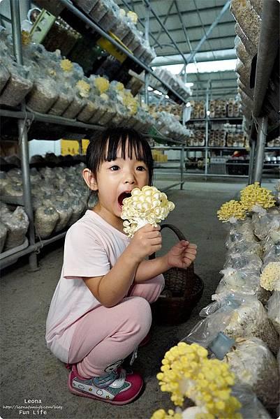 新社親子DIY景點 百菇莊 採菇 吃菇 買菇 DO菇DSC02407.JPG