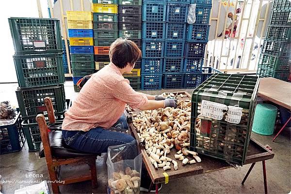 新社親子DIY景點 百菇莊 採菇 吃菇 買菇 DO菇DSC02378