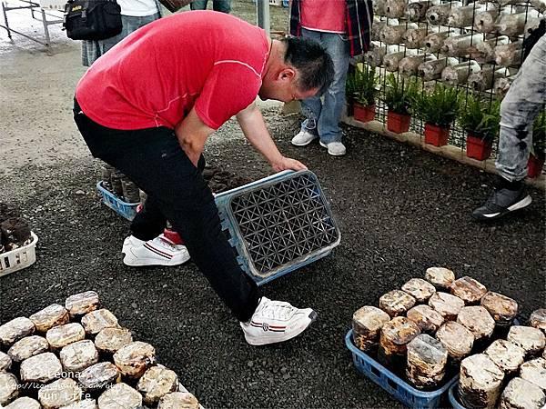 新社親子DIY景點 百菇莊 採菇 吃菇 買菇 DO菇DSC02412