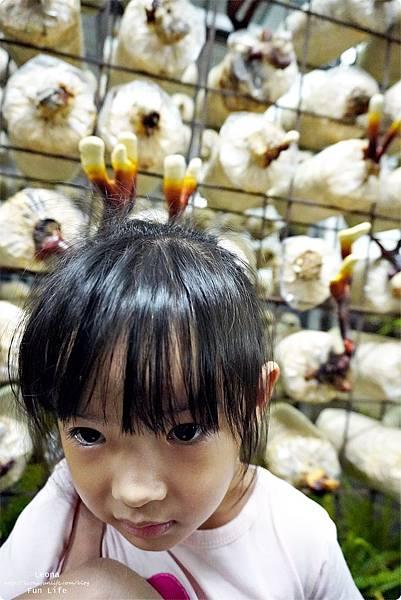 新社親子DIY景點 百菇莊 採菇 吃菇 買菇 DO菇DSC02501