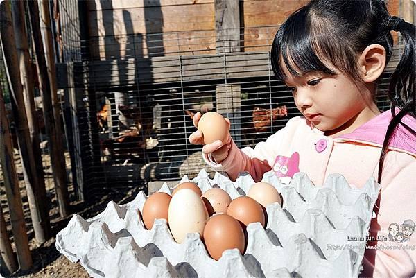 新社親子一日遊景點 新社商圈 採香菇 撿雞蛋 做蛋捲 布拉姆田莊 食農 昇和香菇園採木耳 台中親子遊 行程安排 帶著長輩出遊DSC06687.JPG