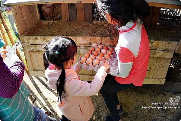 新社親子一日遊景點 新社商圈 採香菇 撿雞蛋 做蛋捲 布拉姆田莊 食農 昇和香菇園採木耳 台中親子遊 行程安排 帶著長輩出遊DSC06684.JPG