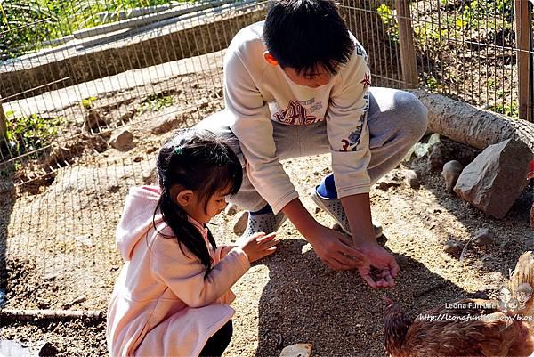 新社親子一日遊景點 新社商圈 採香菇 撿雞蛋 做蛋捲 布拉姆田莊 食農 昇和香菇園採木耳 台中親子遊 行程安排 帶著長輩出遊DSC06709.JPG