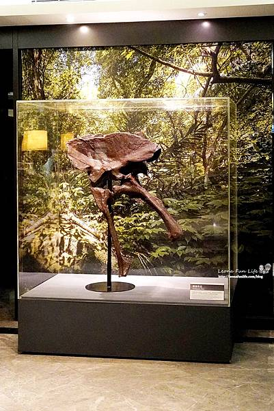 新北景點 大板根恐龍展 門票 探索森林 親子房 大板根森林溫泉酒店評價 住宿推薦 親子景點 親子一日遊 溫泉 森林 侏羅紀 DSC06657.JPG