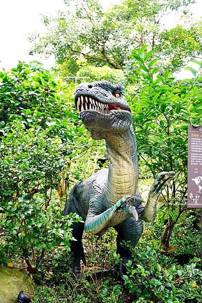 新北景點 大板根恐龍展 門票 探索森林 親子房 大板根森林溫泉酒店評價 住宿推薦 親子景點 親子一日遊 溫泉 森林 侏羅紀DSC06327.JPG