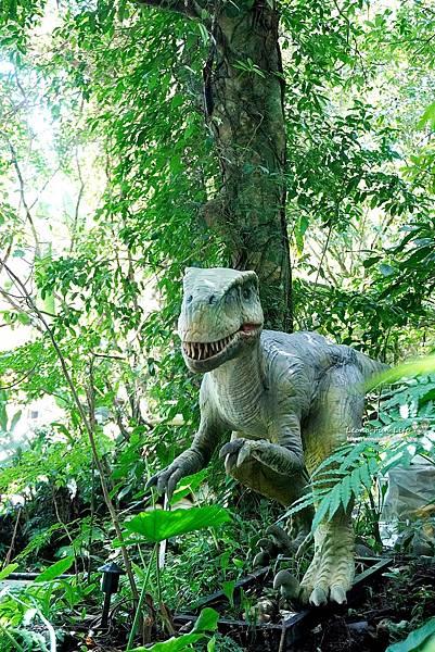 新北景點 大板根恐龍展 門票 探索森林 親子房 大板根森林溫泉酒店評價 住宿推薦 親子景點 親子一日遊 溫泉 森林 侏羅紀DSC07045.JPG