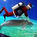 期間限定花蓮遠雄海洋公園-銀白飄雪聖誕季、歡樂遊行、雪屋玩雪,還有美人魚共舞喔!花蓮景點1DSC09324.JPG