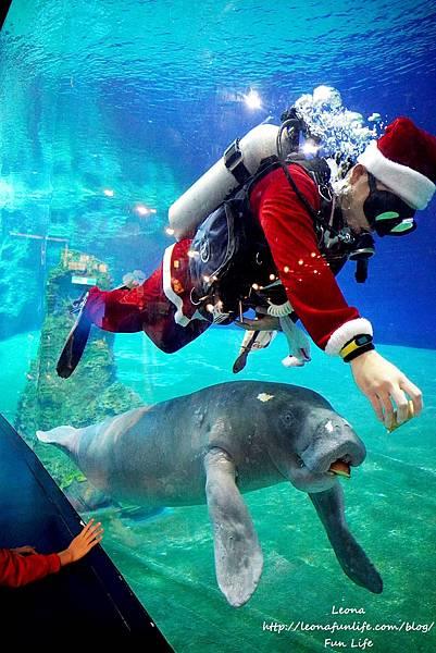 期間限定花蓮遠雄海洋公園-銀白飄雪聖誕季、歡樂遊行、雪屋玩雪,還有美人魚共舞喔!花蓮景點1DSC09320.JPG
