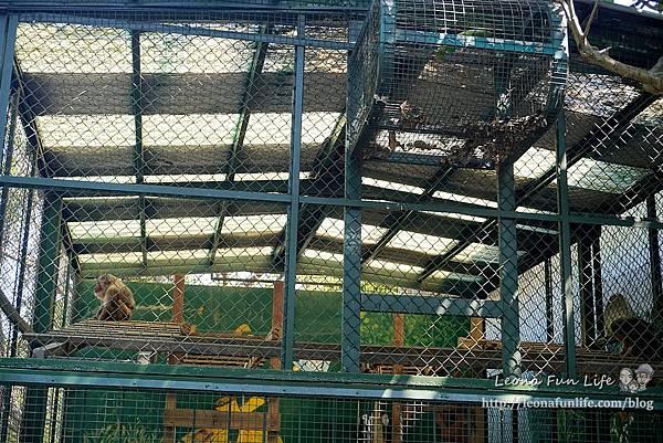 高雄親子景點2021 高雄親子遊樂園 高雄親子公園 壽山動物園門票 壽山動物園交通  壽山動物園門票免費 壽山動物園附近美食 壽山動物園附近景點 壽山動物園免費 1DSC05611.JPG