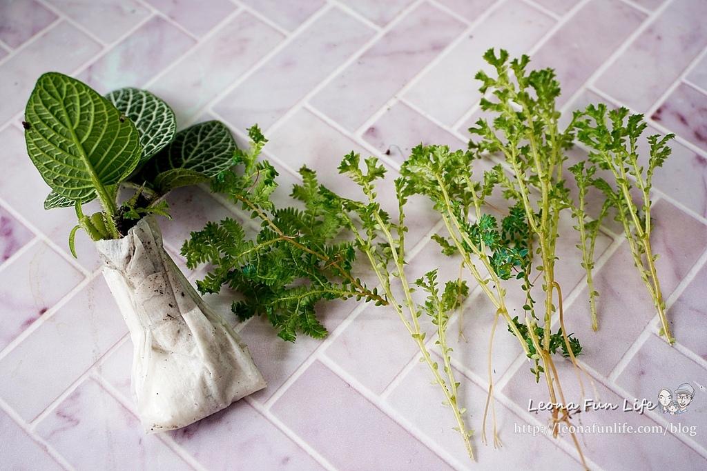 親子DIY體驗原生態工作室-植物生態瓶材料包手作DIY,免準備、零失誤,輕鬆打造療癒微景室內植栽擺件DSC02047.JPG