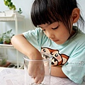 親子DIY體驗原生態工作室-植物生態瓶材料包手作DIY,免準備、零失誤,輕鬆打造療癒微景室內植栽擺件DSC02042.JPG
