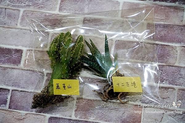 親子DIY體驗原生態工作室-下班隨手作 DIY 材料包,新手也能輕鬆入手美美的多肉植物室內植栽擺件DSC02087.JPG