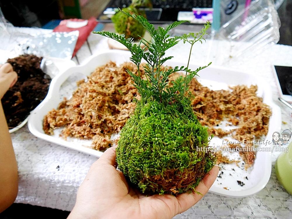苔球製作 苔蘚球製作 水苔球製作  苔球長蟲 苔球麻繩 苔玉球diy 多肉苔球 苔球製作課程 苔球發霉 苔球購買 水苔球 原生態工作室 手作DIY 綠植星球 植物觀察學青苔球材料包P1770283.JPG