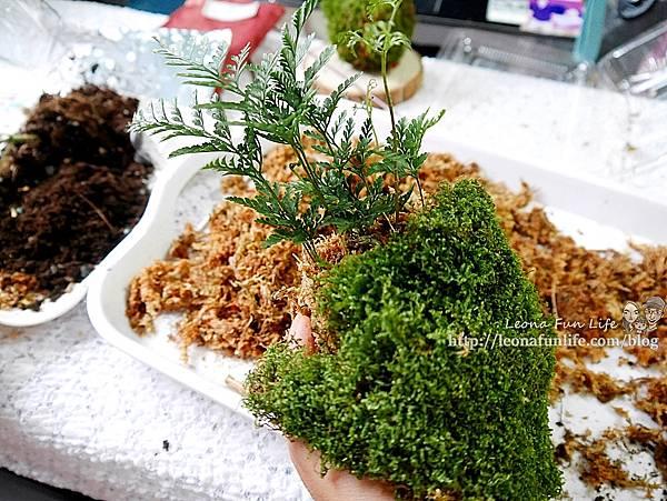 苔球製作 苔蘚球製作 水苔球製作  苔球長蟲 苔球麻繩 苔玉球diy 多肉苔球 苔球製作課程 苔球發霉 苔球購買 水苔球 原生態工作室 手作DIY 綠植星球 植物觀察學青苔球材料包P1770281.JPG