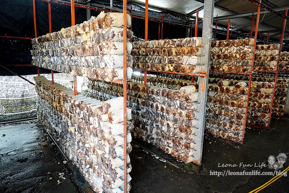 豐年靈芝菇類生態農場南投埔里親子景點推薦,走進菇菇樂園DIY菇菇披薩、採菇、踏青、爬木屑山DSC05120.jpg