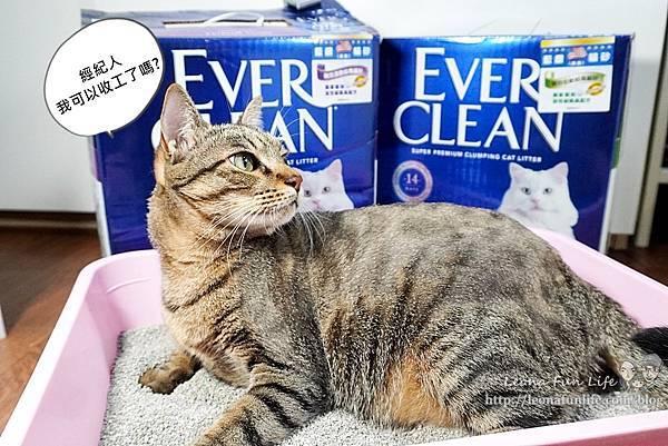 Ever Clean 藍鑽超凝結貓砂強效清香低敏使用心得-貓砂界 LV低粉塵、凝結快、活性碳除臭貓砂推薦DSC06534-2.jpg