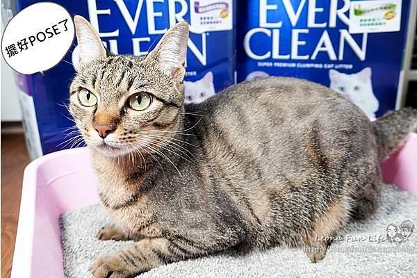 Ever Clean 藍鑽超凝結貓砂強效清香低敏使用心得-貓砂界 LV低粉塵、凝結快、活性碳除臭貓砂推薦DSC06537-2.jpg