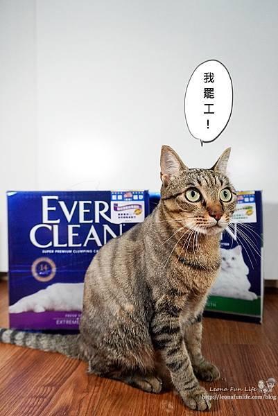 Ever Clean 藍鑽超凝結貓砂強效清香低敏使用心得-貓砂界 LV低粉塵、凝結快、活性碳除臭貓砂推薦DSC06512-2.jpg