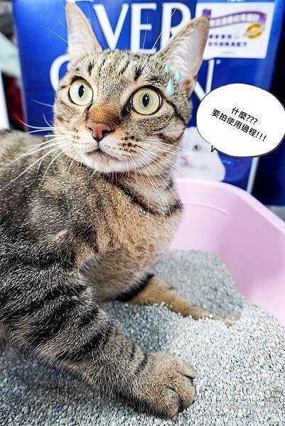 Ever Clean 藍鑽超凝結貓砂強效清香低敏使用心得-貓砂界 LV低粉塵、凝結快、活性碳除臭貓砂推薦DSC06538-2.jpg